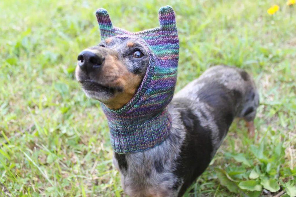 köpek şapkası