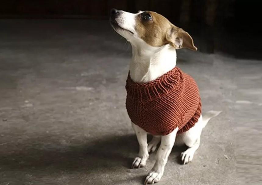 yavru köpekler için kazak modeli